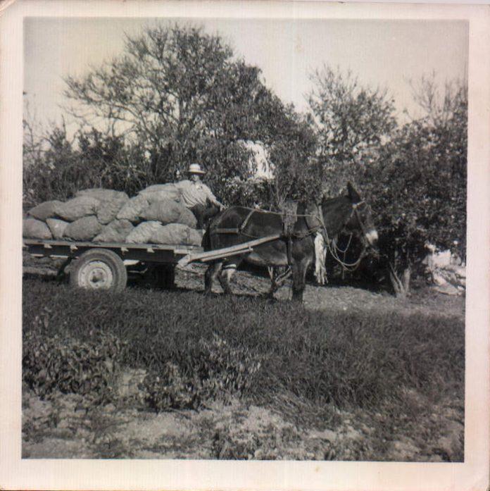 CARRO - 1960
