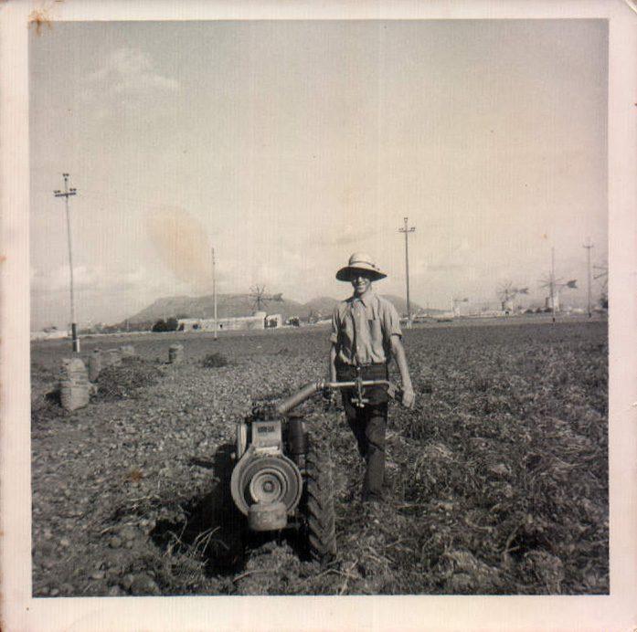 RECOGER PATATAS - 1960