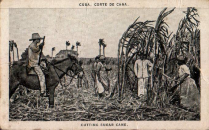 Cañas de azucar (Cuba)1926