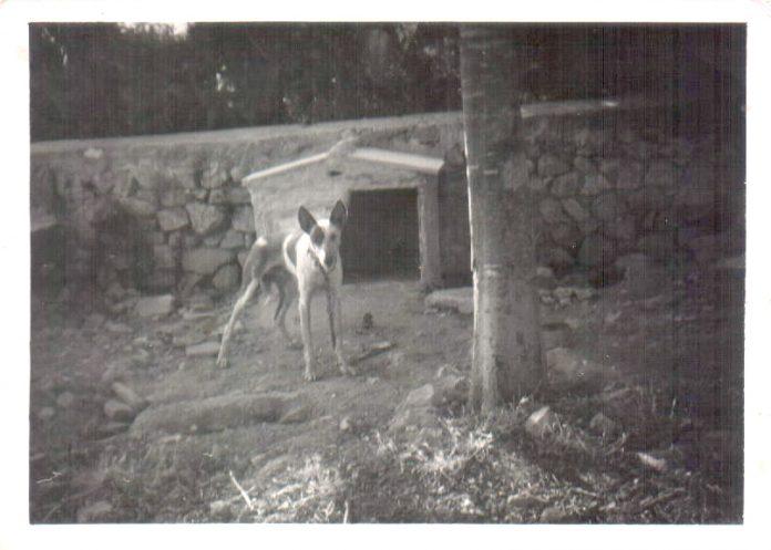 PODENCO - 1966