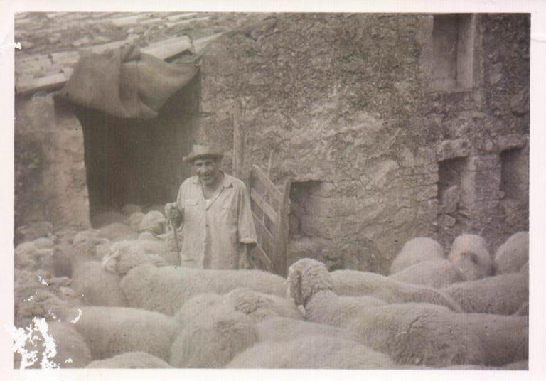Pastor con ovejas (Biniatria) 1950